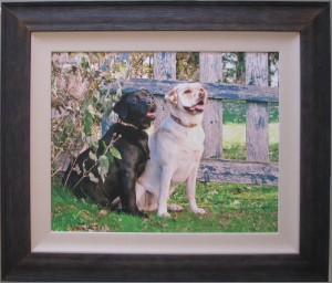 Dogs canvas